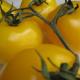Еще немного о пользе томатов