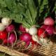 Выращивание и польза редиса