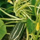 Как правильно поливать лечить и подкармливать кабачки?