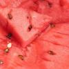 Полезные и лечебные свойства арбуза