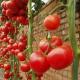 Способы подвязывания томатов