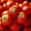 Выращивание томатов - бабушкины секреты