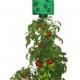 Висячие сады томата - это реальность