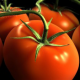 Что любят и не любят томаты